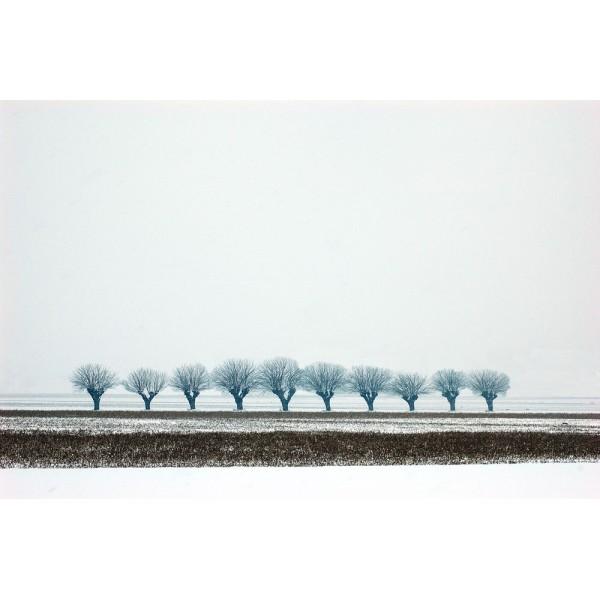 Snow #3