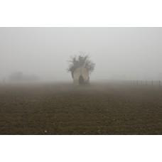 Fog #5